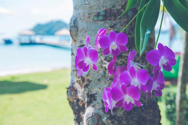 Purpurrote orchideen auf einem blumenstrauß am strand morgens