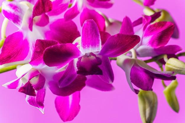 Purpurrote orchideenblume auf buntem purpurrotem hintergrund, atelieraufnahme.