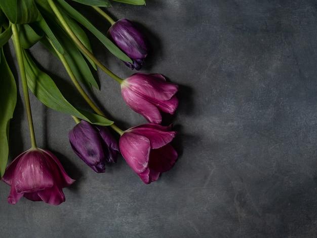 Purpurrote ultraviolette tulpen auf grayk hintergrund mit platz für text