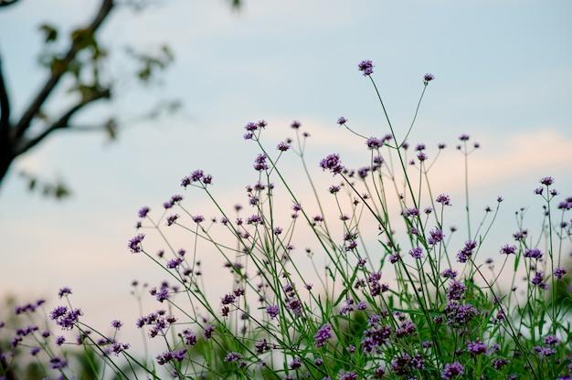 Purpurroter blumen-garten schöner blumen-garten mit schlüsselkopienraum