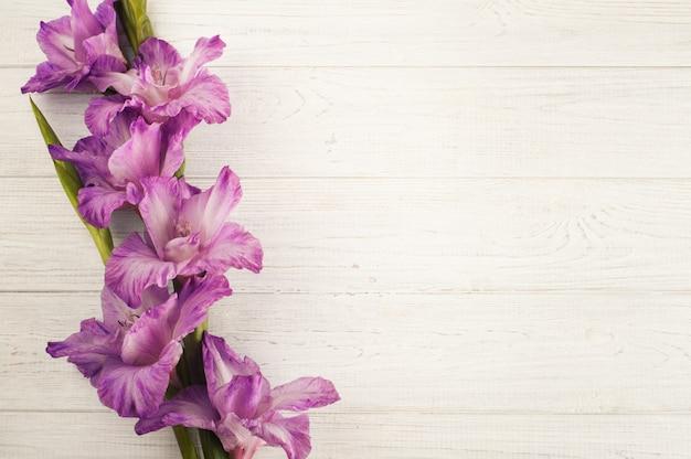Purpurroter gladiolus auf weißer tabelle