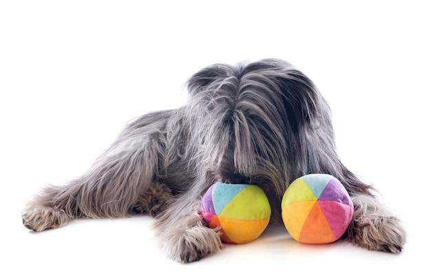 Pyrenäen-schäferhund und spielzeug