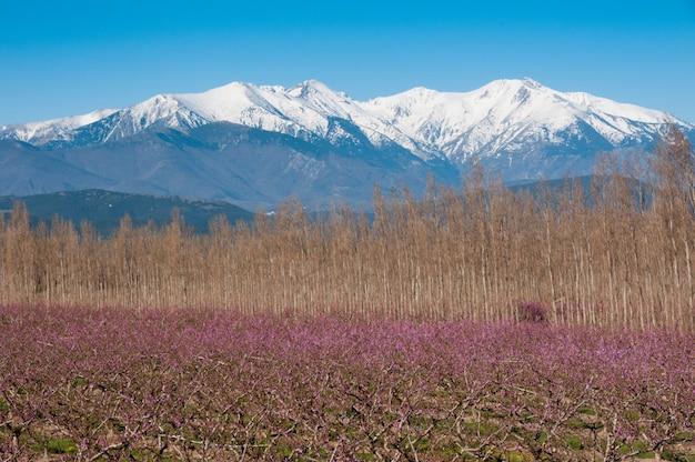 Pyrenees gebirgsblumenbauernhof-rosarose