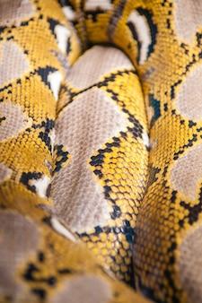 Python eine der größten schlangen der welt