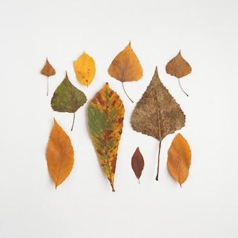 Quadrat von den Herbstblättern