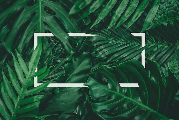 Quadratischer farbausschnitt mit grünen blättern, die zum einfügen von text ausgerichtet sind