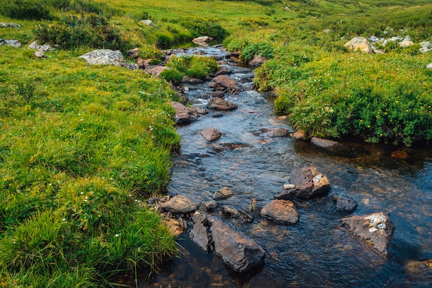 Quellwasserstrom im grünen tal am sonnigen tag. reiche hochlandflora. erstaunliche gebirgsvegetation nahe gebirgsbach. wunderbare paradiesische landschaft. paradiesische sonnige malerische landschaft.