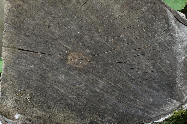 Querschnitt eines baumes