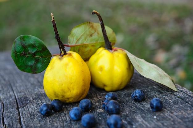 Quittenfrüchte und schwarzdornbeeren