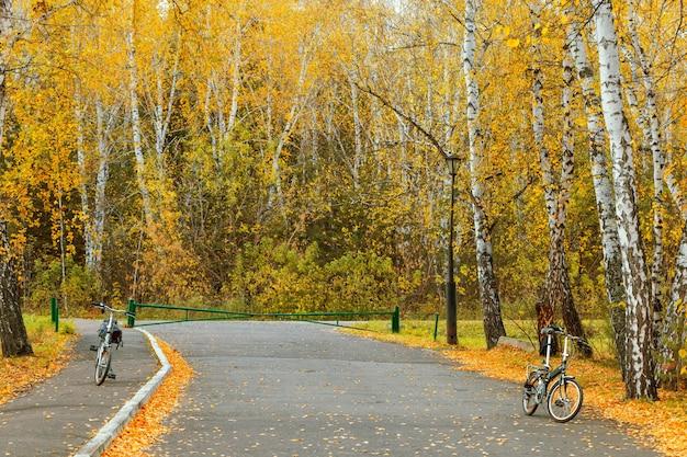 Radfahren im herbstlichen wald. spazieren sie mit dem fahrrad zwischen wunderschönen birken, die herbstliche gelbe blätter bedecken.
