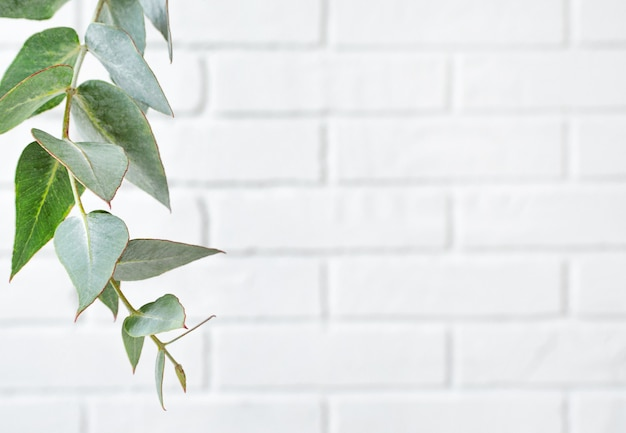 Rahmen aus eukalyptuszweig auf weißer backsteinmauer mit kopierraum.
