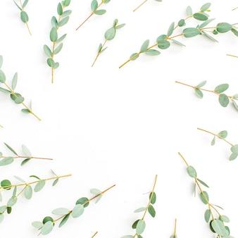 Rahmen aus eukalyptuszweigmuster mit platz für text auf weißem hintergrund. flache lage, ansicht von oben