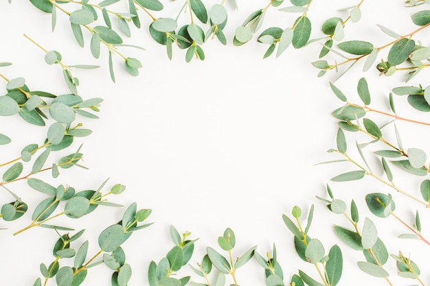 Rahmen aus eukalyptuszweigmuster mit platz für text auf weißem hintergrund. flache lage, ansicht von oben Premium Fotos
