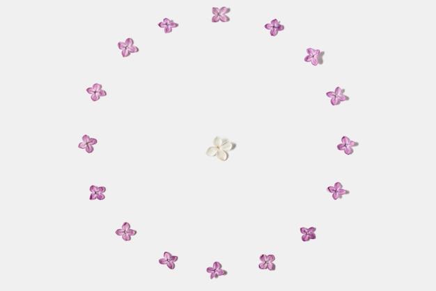 Rahmen aus frühlingsfliederblumen lokalisiert auf weiß
