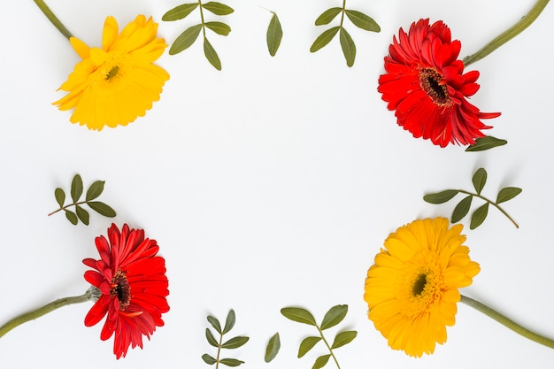 Rahmen aus gerberablumen und grünen blättern