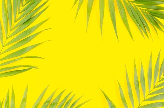 Rahmen aus grünen palmblättern