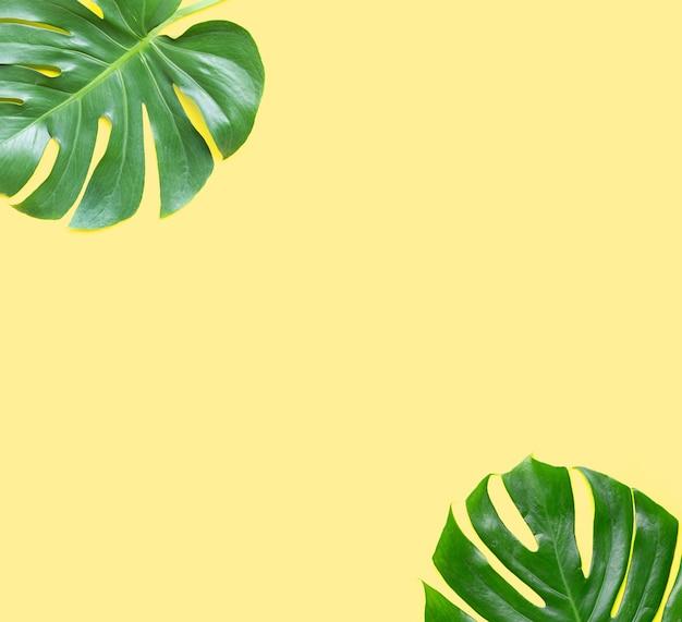 Rahmen aus monstera-pflanzenblättern auf gelbem hintergrund.