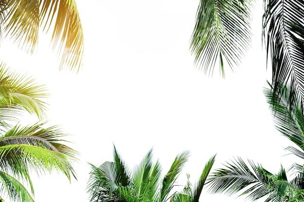 Rahmen aus palmblättern Premium Fotos