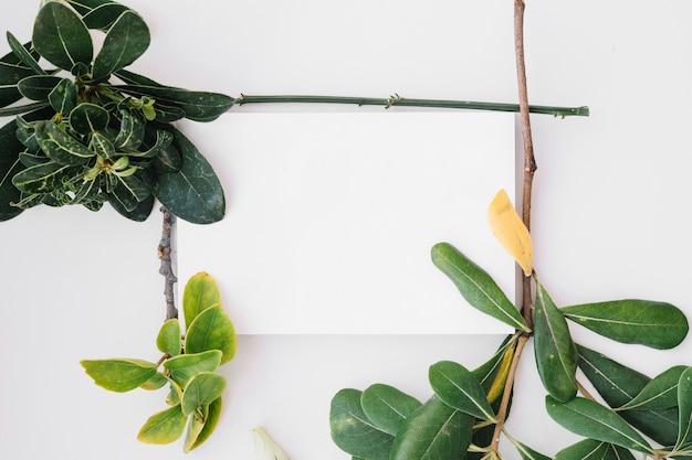 Rahmen aus pflanzenzweigen
