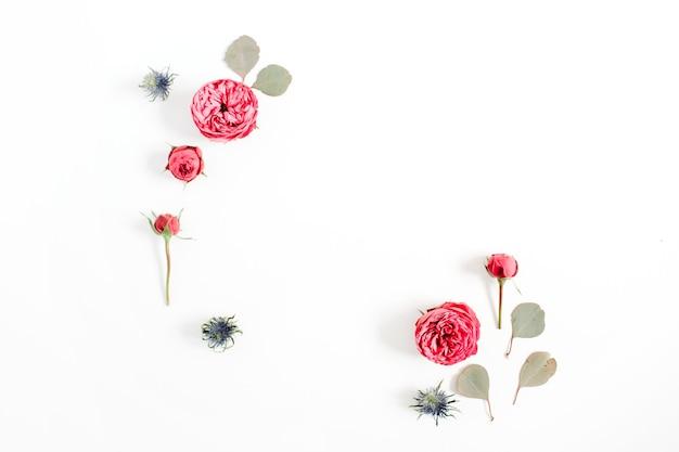 Rahmen aus roten rosenblütenknospen, eukalyptuszweige isoliert auf weiß
