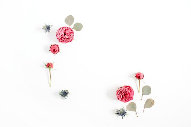 Rahmen aus roten rosenblütenknospen, eukalyptuszweige isoliert auf weißem hintergrund. flache lage, ansicht von oben
