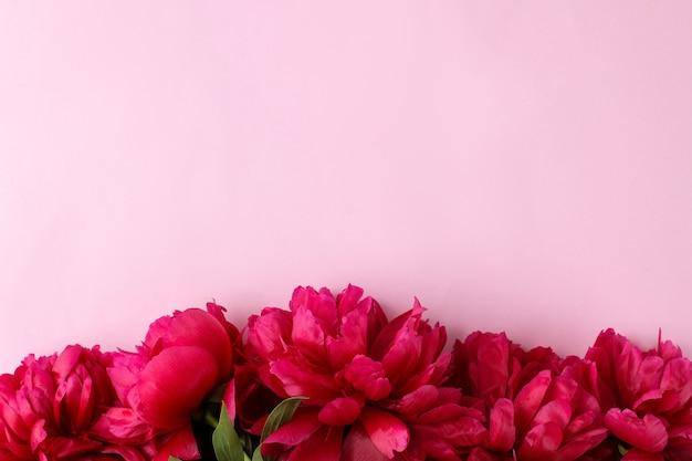 Rahmen aus schönen leuchtend rosa blumen pfingstrosen auf einem sanften rosa hintergrund. ansicht von oben. platz für text