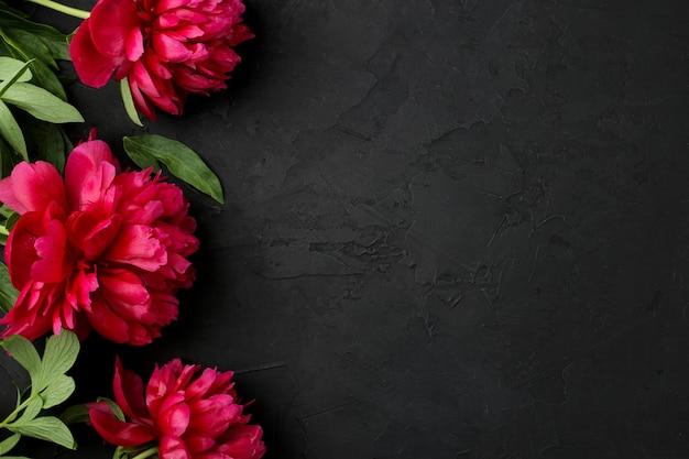 Rahmen aus schönen leuchtend rosa blumen pfingstrosen auf schwarzem graphithintergrund. ansicht von oben. platz für text