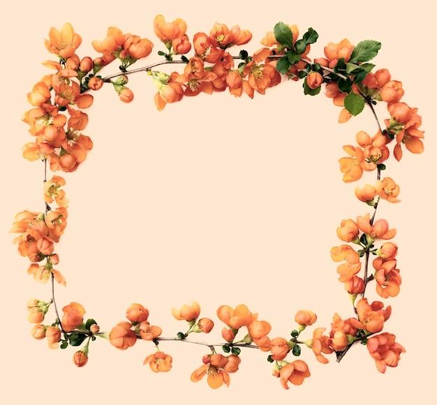 Rahmen aus zarten frühlingszweigen mit hellen quittenblüten, nahaufnahme, isoliert auf einem pastellfarbenen hintergrund