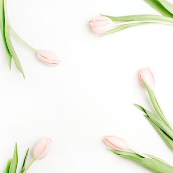 Rahmen der blassrosa tulpenblumen auf weiß