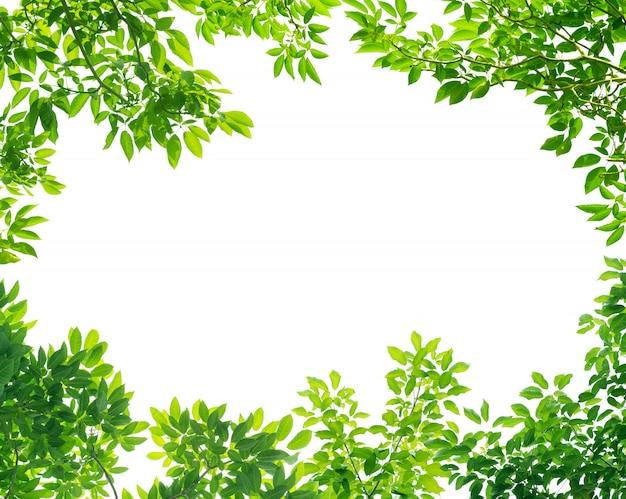Rahmen der grünen blätter auf weißem hintergrund mit mittelraum