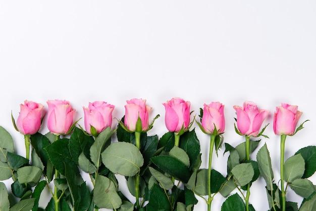 Rahmen der rosa rosen auf weißem hintergrund