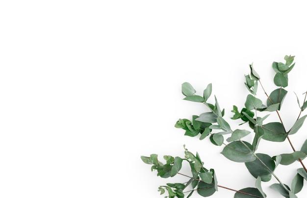 Rahmen, ecke aus grünen eukalyptusblättern und zweigen auf weißem hintergrund. blumenkomposition. flaches laienbild des femininen stils, draufsicht. speicherplatz kopieren.