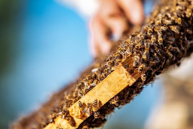 Rahmen eines bienenstocks. arbeitende bienen in einem bienenstock. bienen verwandeln nektar in honig.