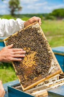Rahmen eines bienenstocks. hand des imkers arbeitet mit bienen und bienenstöcken am bienenhaus.