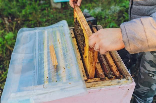 Rahmen eines bienenstocks. imker erntet honig. der bienenraucher wird verwendet, um bienen vor dem entfernen des rahmens zu beruhigen. imker inspiziert bienenstock.