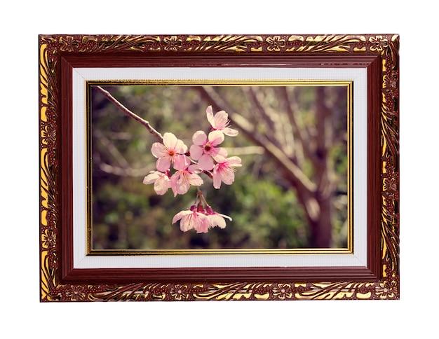 Rahmen mit blumen, wilde himalaya-kirschblume, riesentigerblume