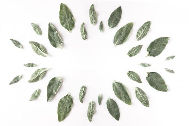 Rahmen mit blumen, zweigen, blättern und blütenblättern über weißem hintergrund