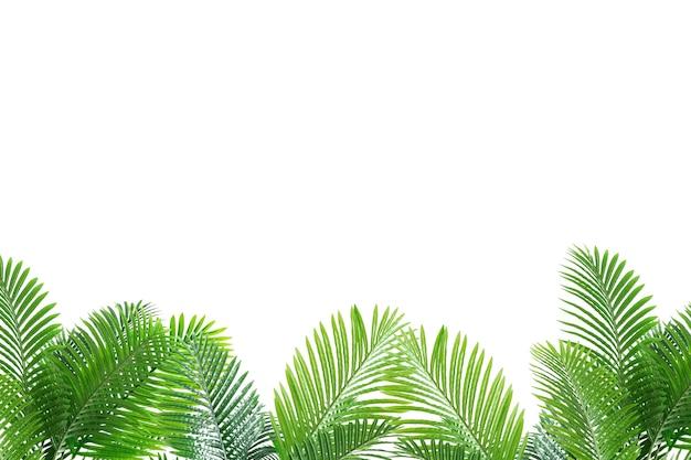 Rahmen von palmblättern lokalisiert auf weißem hintergrund mit kopienraum.