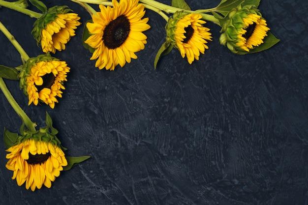 Rahmen von sonnenblumen