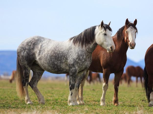 Ranch-pferde in utah