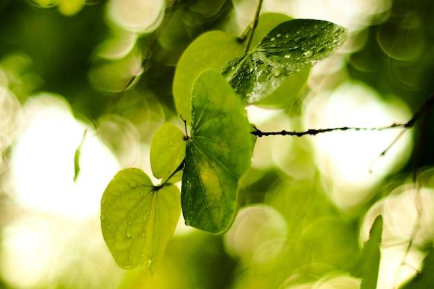 Ranch von frischen grünen baumblättern auf grünem hintergrund