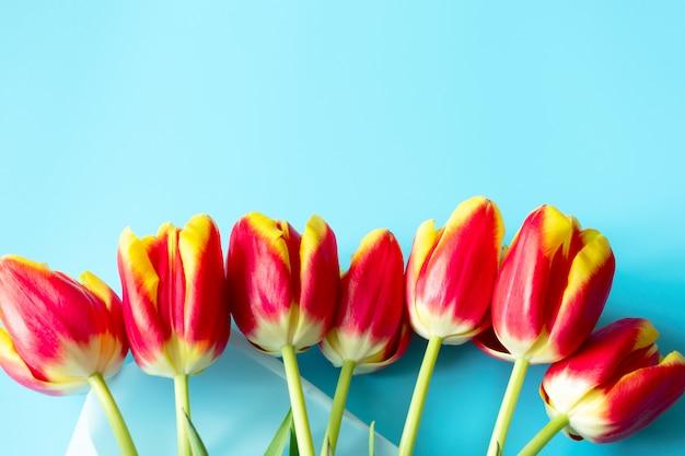 Rand von den gelben roten tulpen auf der leuchtend blauen wand, oben. helle feiertagsschablone mit kopierraum