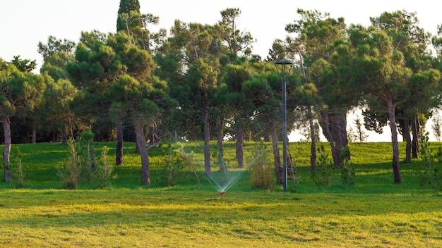 Rasen in einem stadtpark gießen