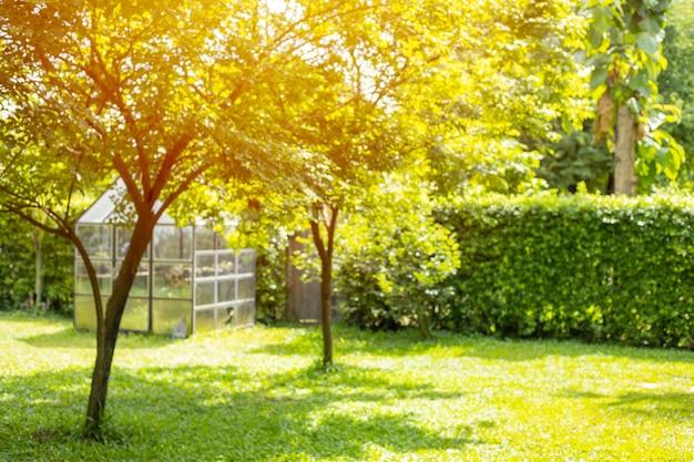 Rasengarten hinterhof grüner parkbaum im freien für naturhintergrund verwischen