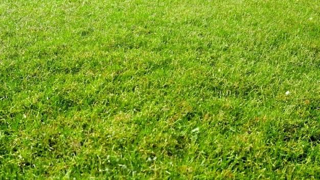 Rasengras-hintergrund