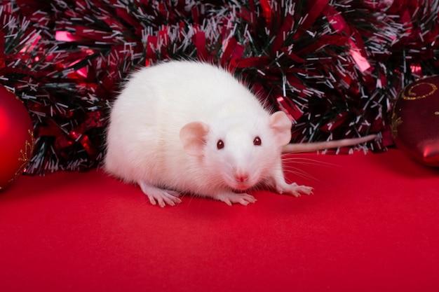 Ratte als symbol des jahres der weißen ratte