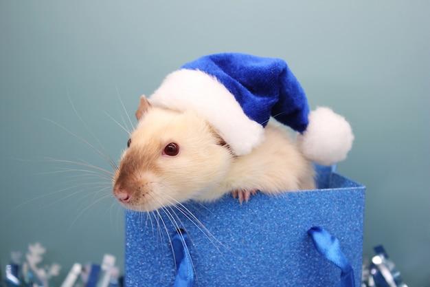 Ratte trägt blaue weihnachtsmütze in einer blauen tasche