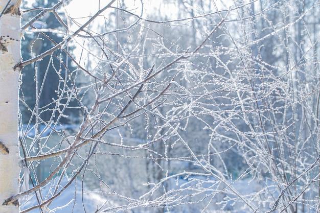 Raureif, der kahle äste an einem sonnigen wintertag bedeckt.