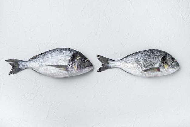 Rawtwo seebrasse oder goldkopfbrasse dorada fisch, draufsicht.