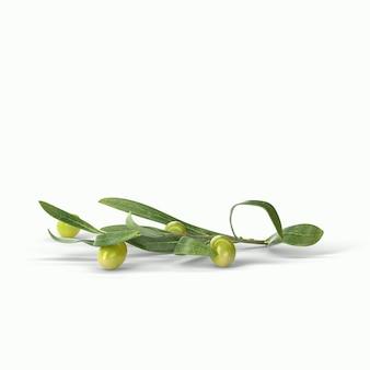Realistische grüne oliven auf einem zweig isolierten weißen hintergrund. 3d-darstellung, passend für ihr designprojekt.